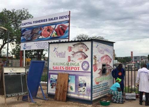 Zambia fish wholesaler