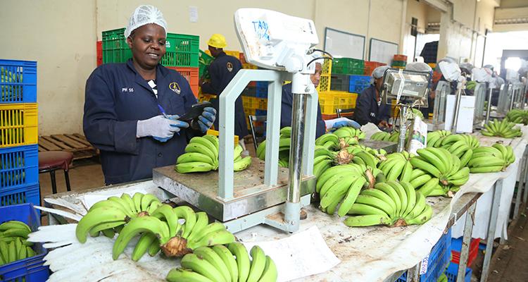 Kenya Agri-mobile