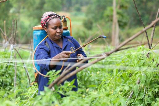 Komaza, using tech for sustainable agroforestry Financing hospital construction