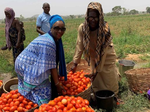 Tomato Jos Farming and Processing Ltd., growing Nigeria's tomato value chain