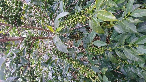 Ethiopia Specialty Coffee
